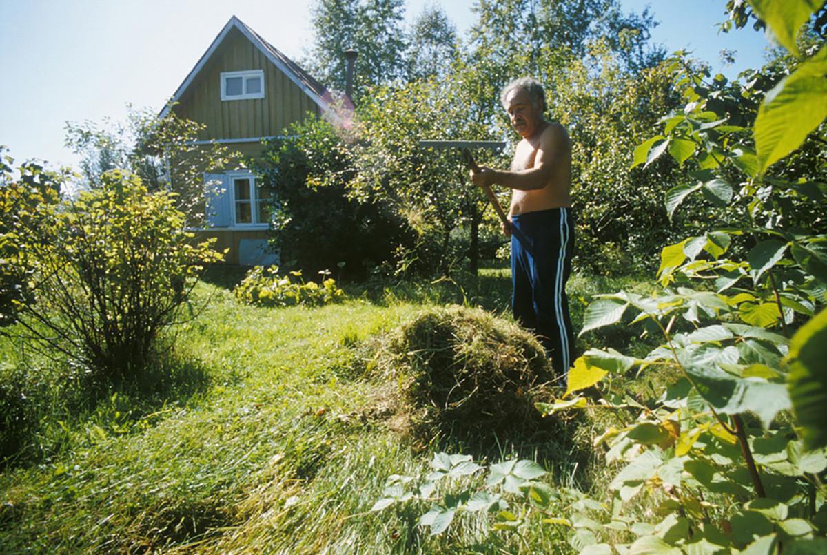 Nemsadze, famoso cirurgião, fazendo jardinagem em sua dátcha.