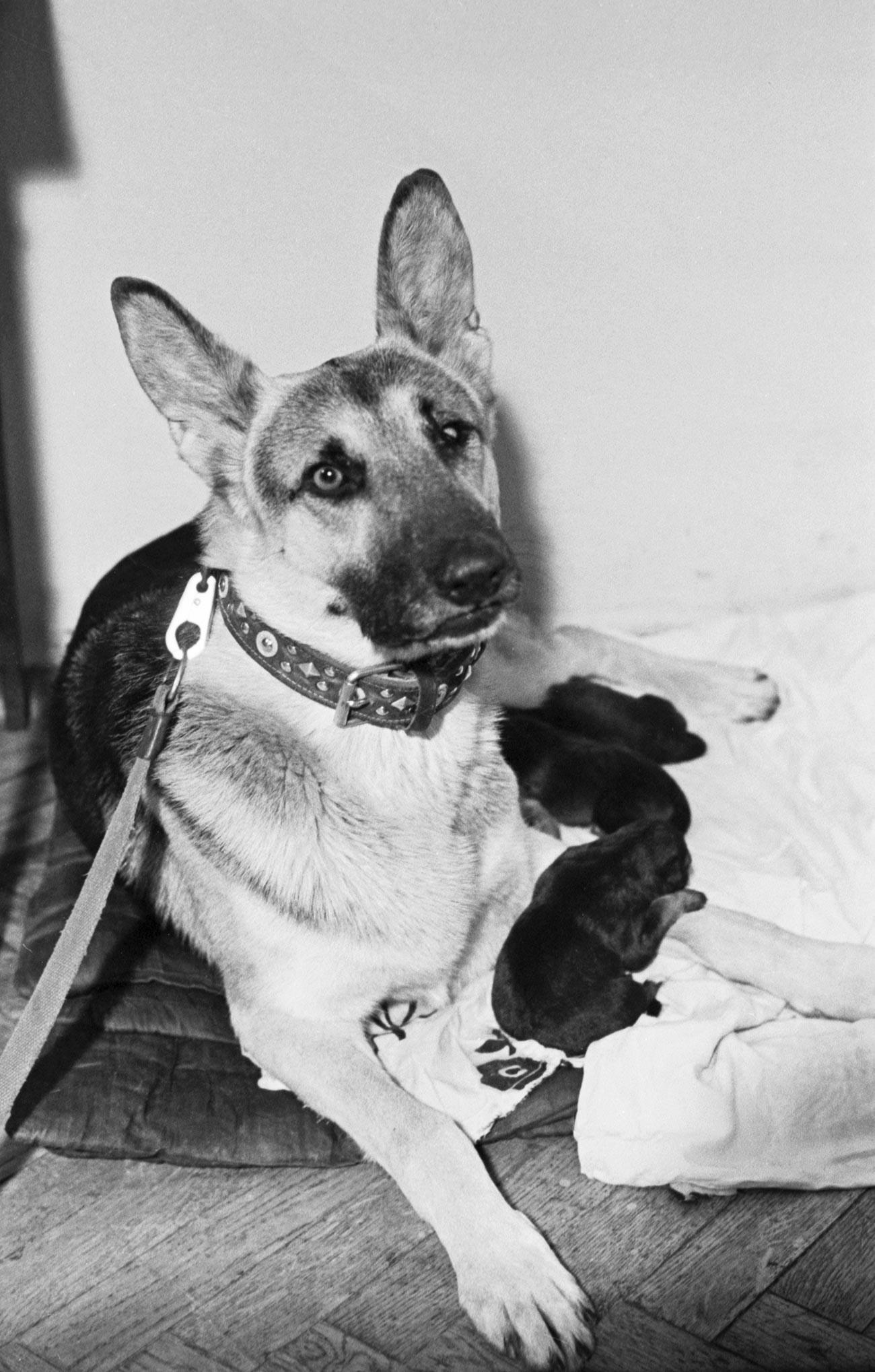 実在したパルマが子犬と一緒に、1976年