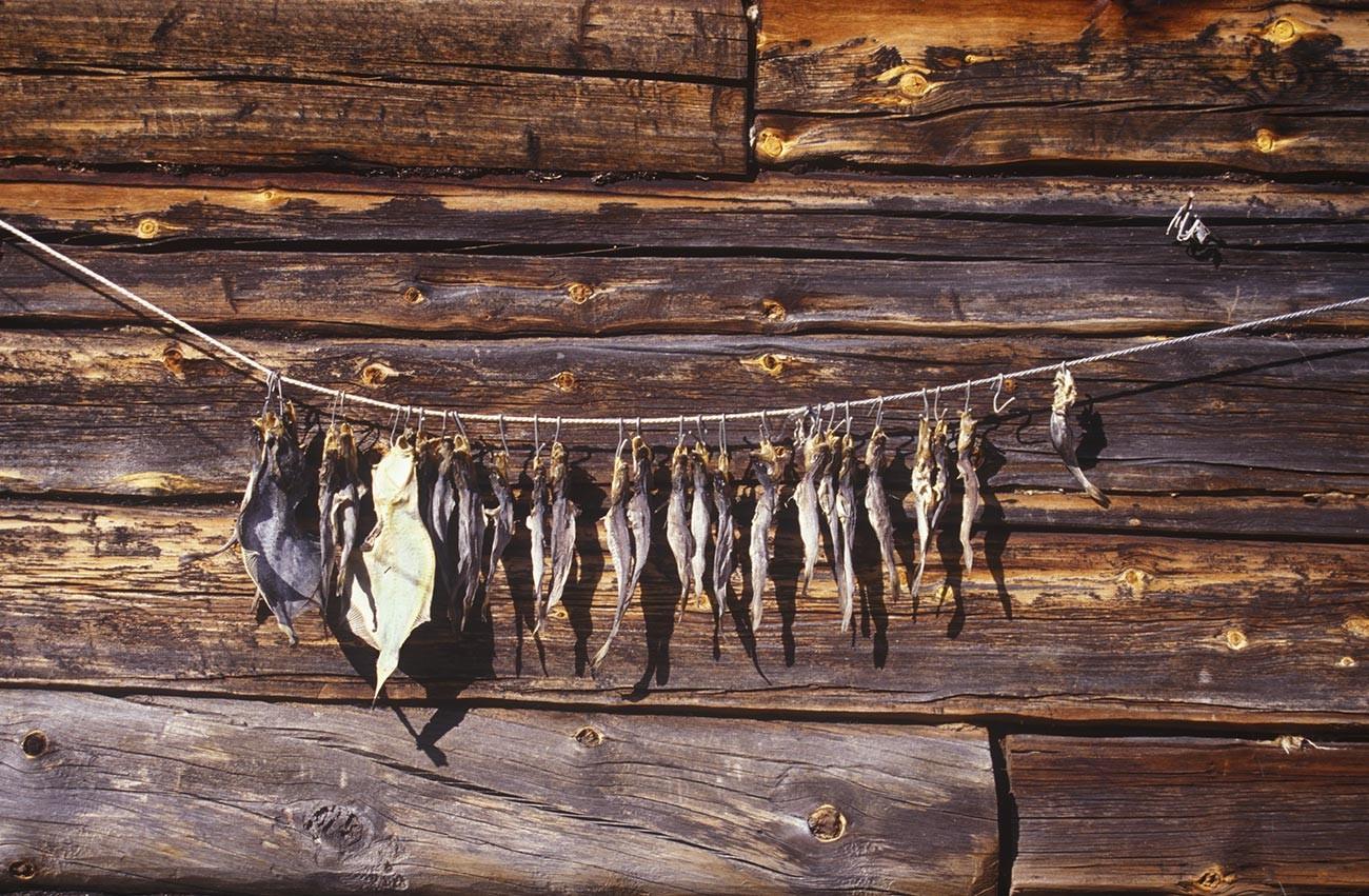 コヴダ村。丸太小屋の壁に干し魚が吊るされている。2001年7月24日。