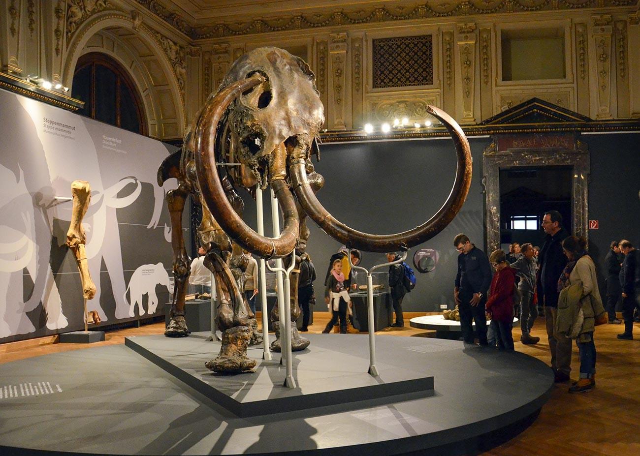 Le mammouth d'Adams exposé à Vienne, Autriche