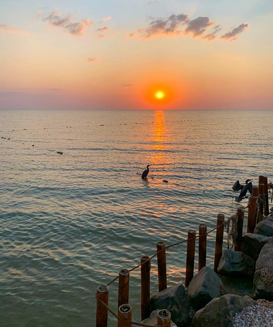 Kormorane bei Sonnenuntergang.