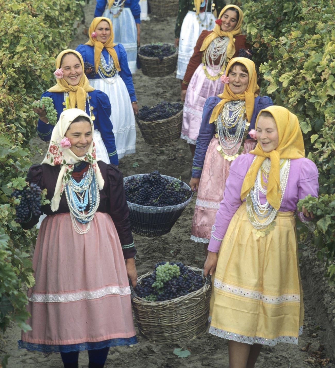 Traubenernte in einem moldawischen Dorf, 1982.