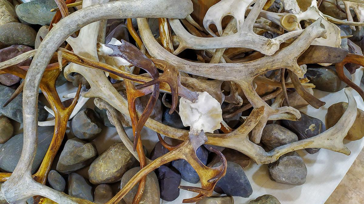 Le corna di cervo vengono utilizzate, tra le varie cose, anche per realizzare souvenir