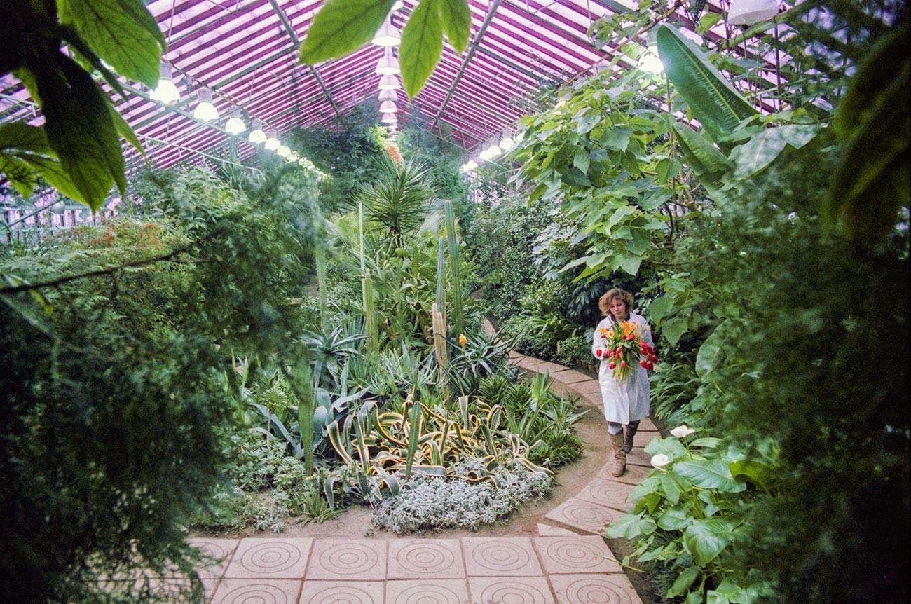 Так выглядела теплица в советские годы. Эти растения здесь до сих пор!