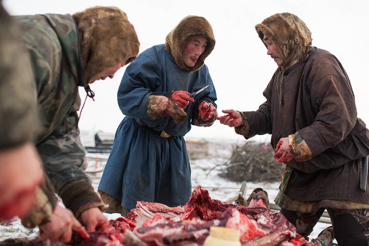Nenecki moški si delijo sveže meso severnih jelenov v kampu, približno 200 km od Saleharda v Rusiji.