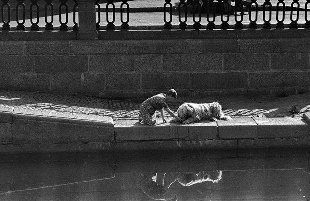 水を飲む犬、1970年代