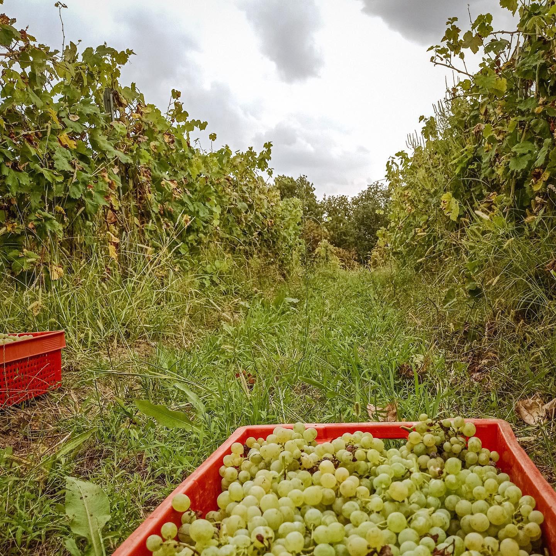 Sober Bash winery.