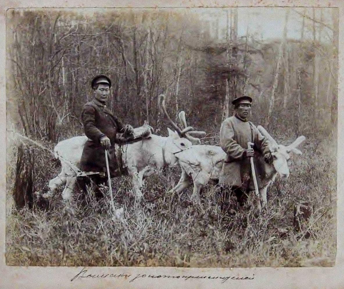 金採掘者を運ぶトナカイ、1895年ごろ、アムール川流域