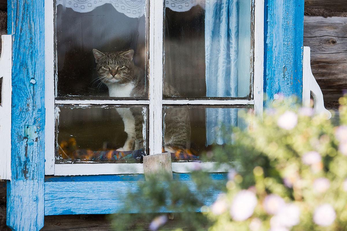 Русија, Омска област, 28. септембар 2016. Свакодневица у селу Корољенко Седељниковског рејона.