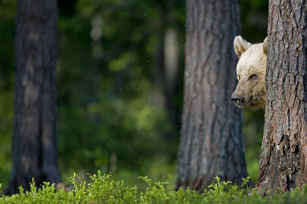 Hilang Tiga Hari di Hutan Penuh Beruang, Bocah Rusia Ditemukan Selamat