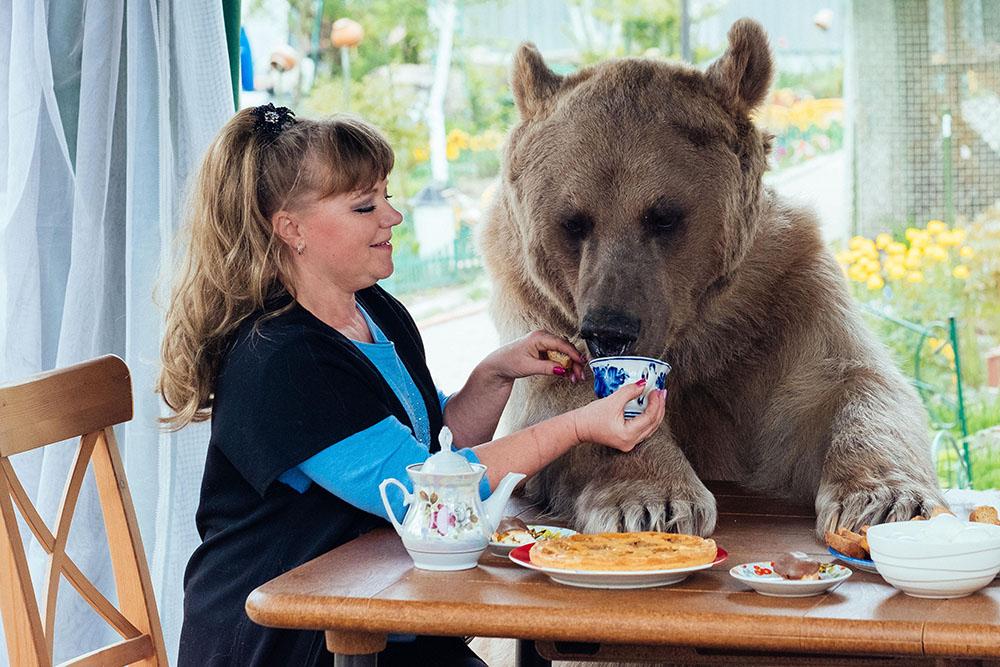 Bagaimana Cara Menjinakkan Seekor Beruang?