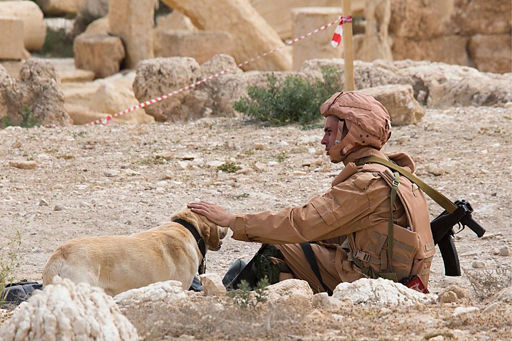 Penyapu Ranjau Rusia Mulai Bersihkan Aleppo Timur, Dibantu Anjing
