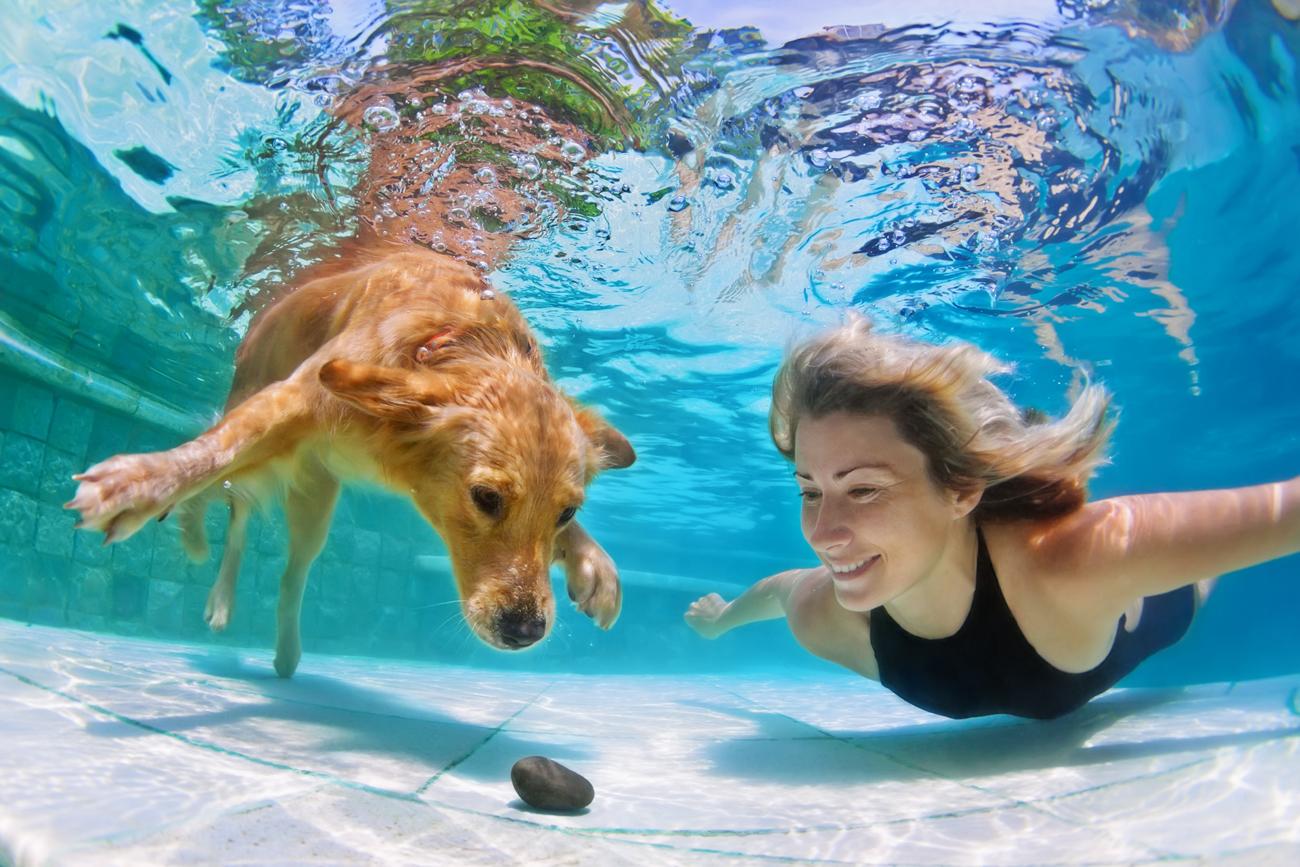 Ilmuwan Rusia Ajarkan Anjing Bernapas dalam Air