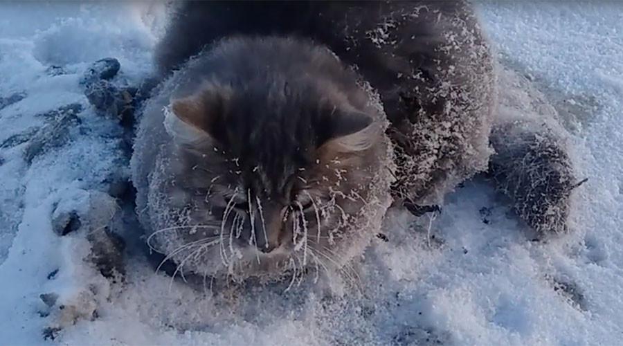 VIDEO: Operasi Penyelamatan Kucing yang Membeku di Jalanan Hebohkan Netizen