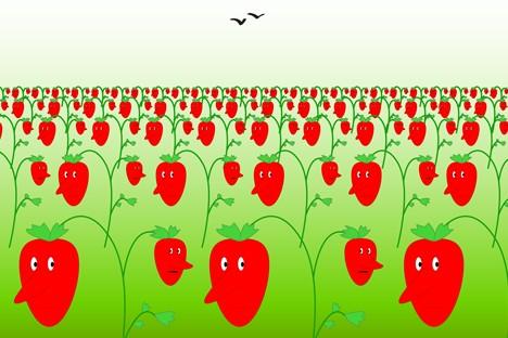 Conheça expressões russas com origem em nomes de frutas e legumes width=