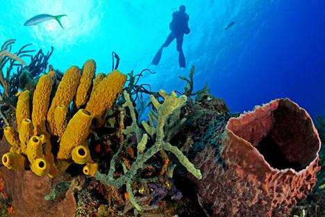Тајанствени морски сунђери лече рак