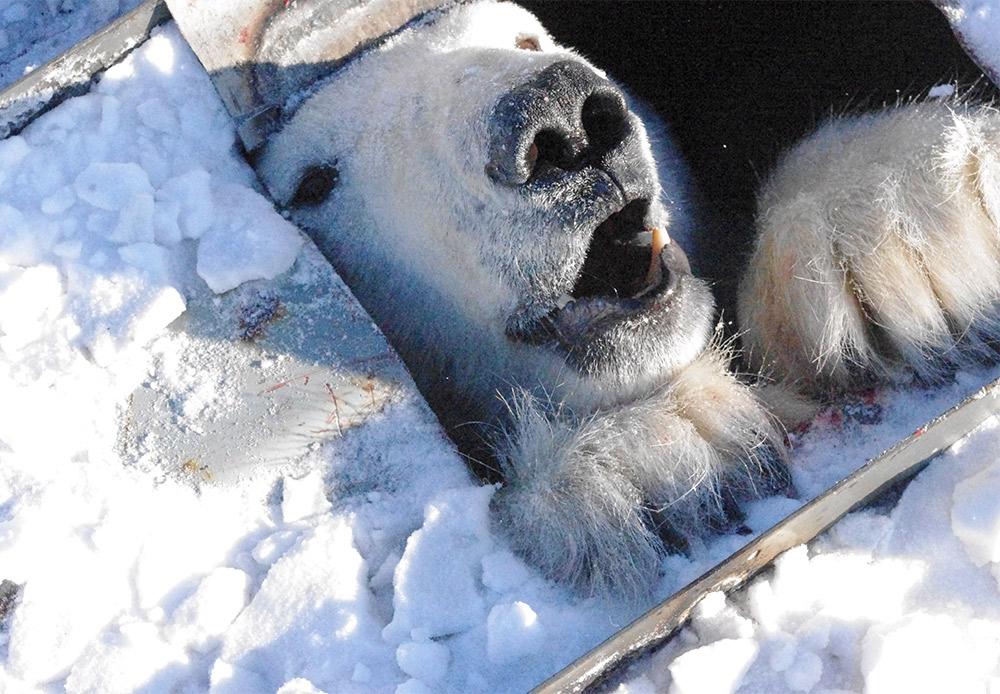Destaques do Ártico russo na visão de um explorador polar width=