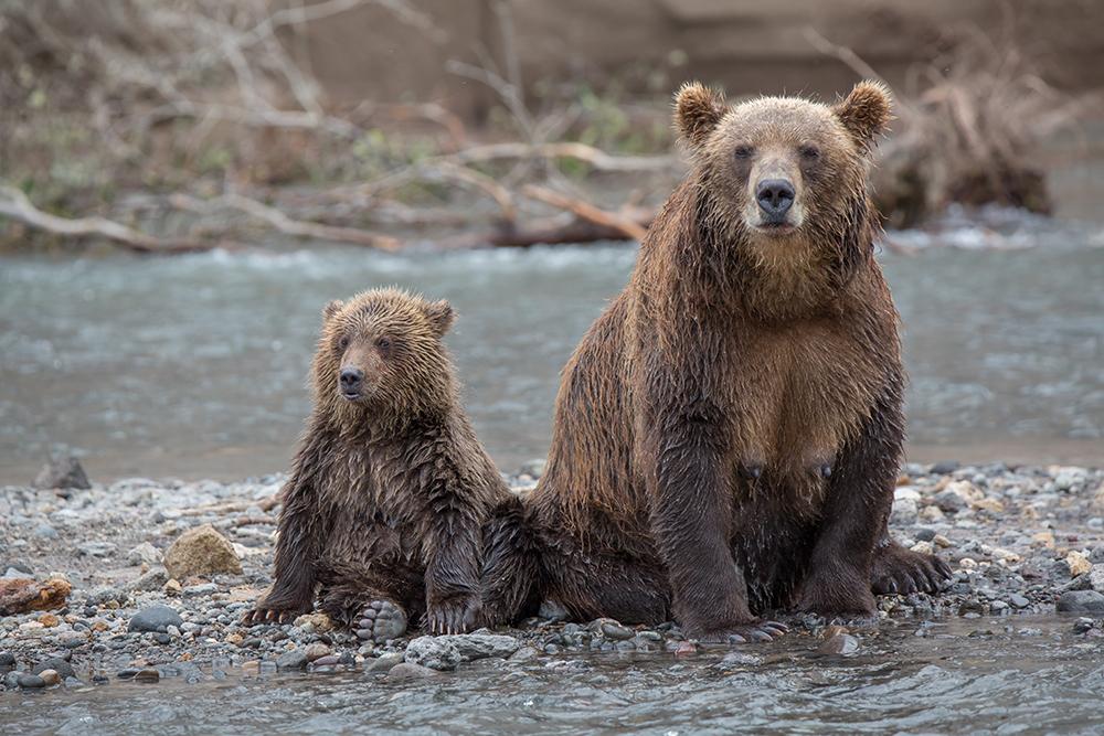Temporada de pesca movimenta 'terra dos ursos'; veja galeria width=