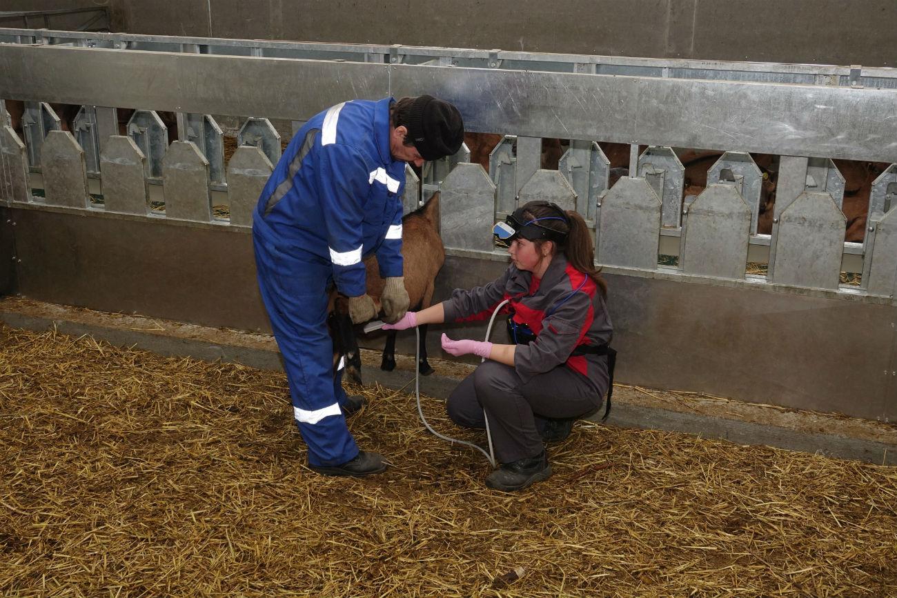 Kozje mleko je hipoalergeno in ga lahko uživajo tudi ljudje, ki so alergični na kravje mleko. Vir: UGMK-Agro