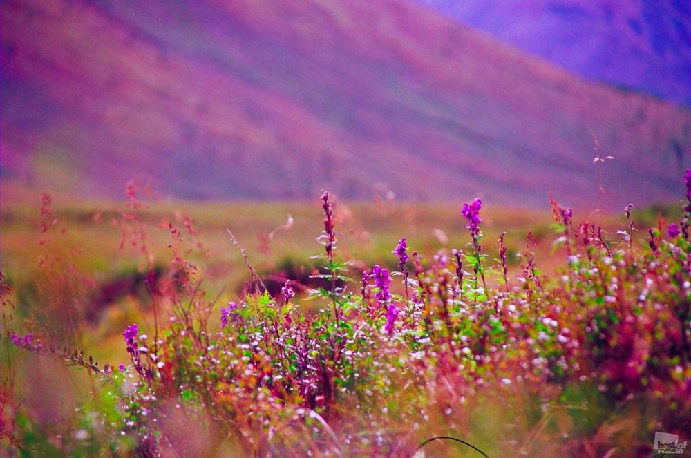 MOTLEY GRASSES. Olga Sharavina.
