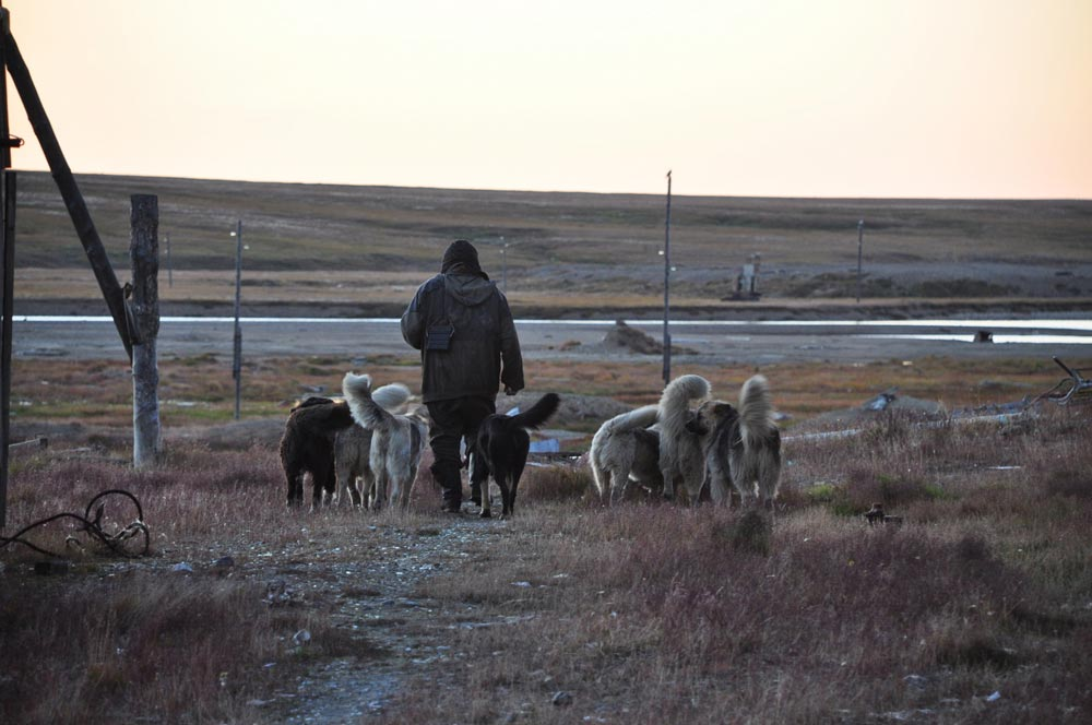 """Farsh (a nickname translated as """"minced meat"""") is the last to remain in the once-densely populated village of Leningradsky. He lives with his dogs and doesn't even dream of returning to the mainland."""