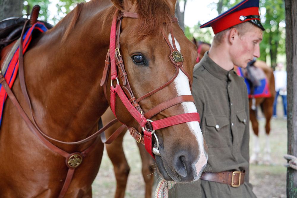 El dinero obtenido en la subasta de París será empleado para la recuperación de la raza de caballos del Don.