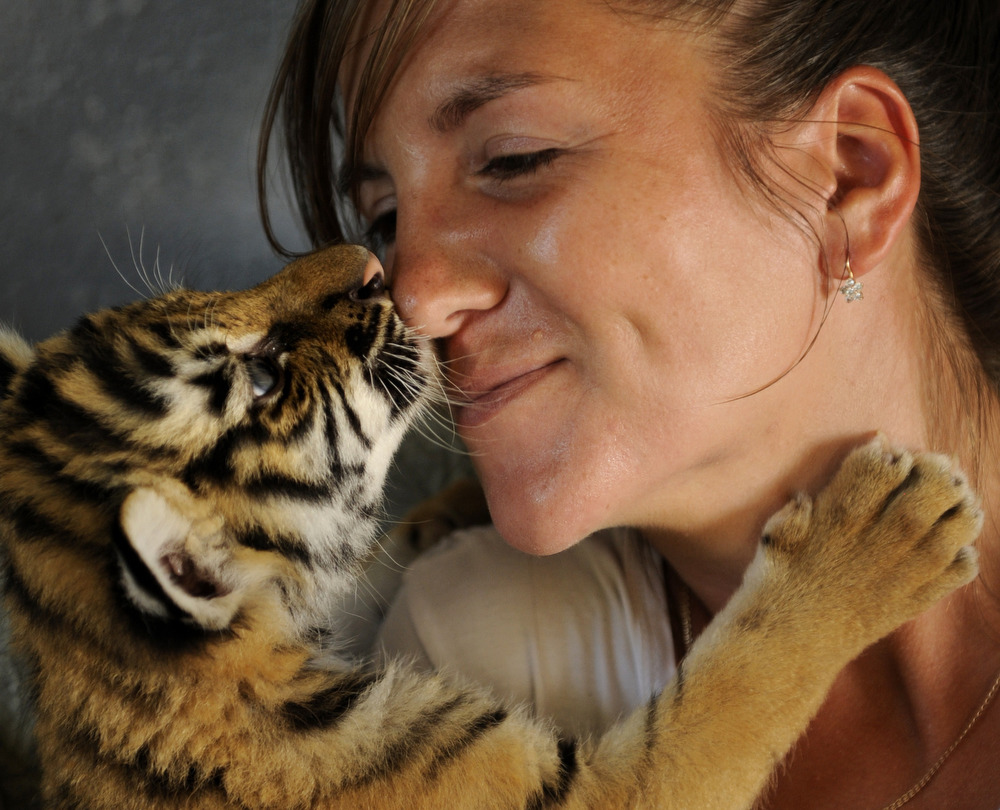 残念ながら、母親に拒絶された子トラたちを犬に育てさせなければいけなかったのは今回が初めてではない。