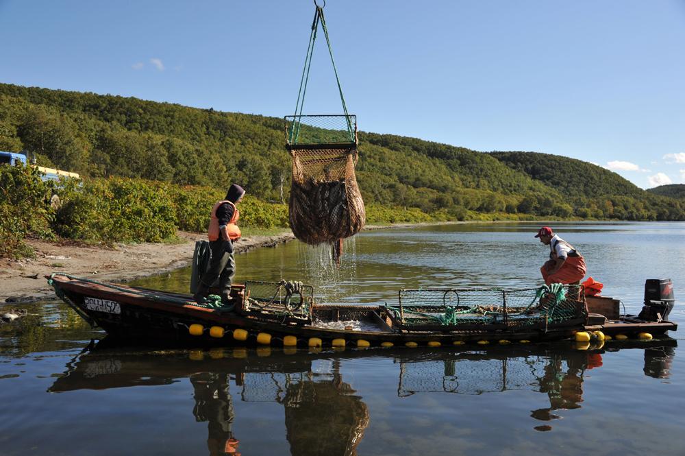 """Der berühmte russische Kaviar wird weltweit exportiert. Ein Kenner sagt, er sei """"wertvoller als Rubel"""". Genauer gesagt die Art, wie er in dem bekannten Fischunternehmen Tunaicha im Fernen Osten gewonnen wird."""