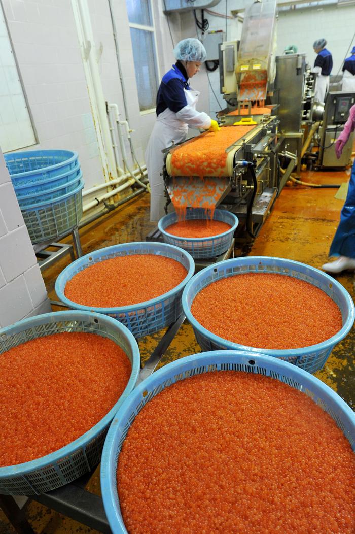 A Tunaitcha é um dos raros casos de sucesso de uma companhia russa que obteve sucesso com o fornecimento de alimentos sofisticados, sobretudo caviar vermelho, no mercado internacional. Os produtos da empresa são muito requisitados no Reino Unido, Holanda, Bélgica, Itália e outros países da Europa Ocidental.