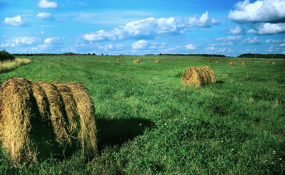 Plusieurs champs de Mintzi appartiennent à l'entreprise agricole Kolos…