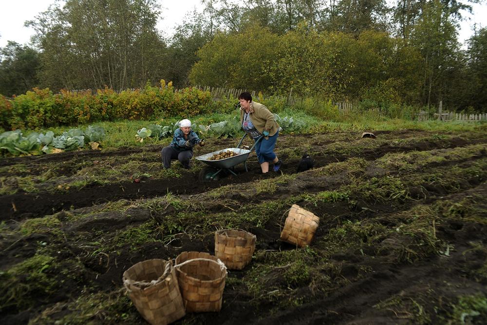 ... qui les utilise pour cultiver le seigle, l'avoine et les pommes de terre.