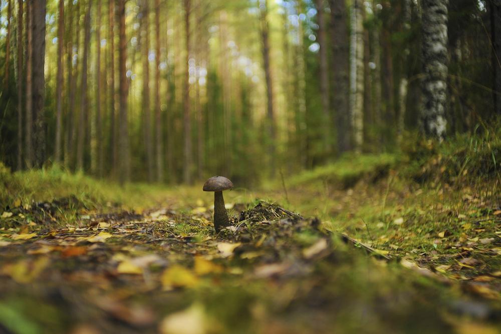 Les forêts locales sont extrêmement pittoresques et regorgent de champignons et de baies.