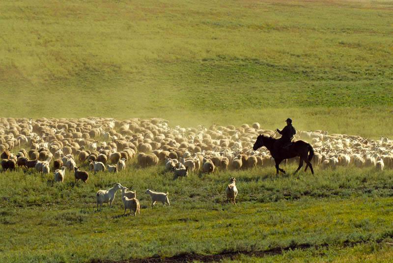 Le Touva est une région agricole, l'élevage de moutons et de bovins étant les principales occupations.