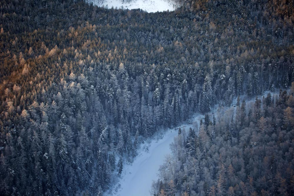 Ispod se prostire tajga, najveći kopneni biom na svijetu, koja čini 29% svjetskog šumskog pokrova. Najveća područja smještena su u Rusiji i Kanadi.