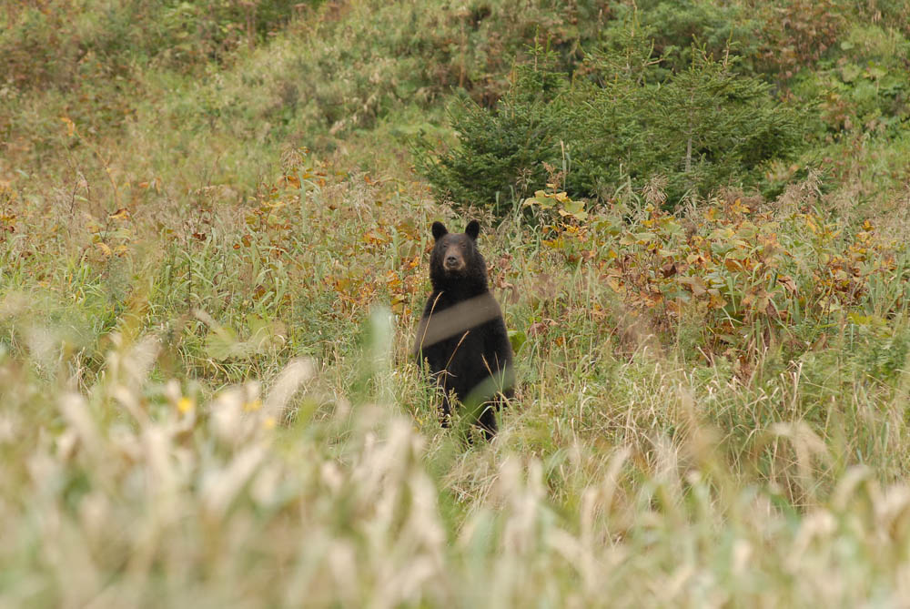 11/12. У овом огромном пространству под својом управом Андреј има само једног суседа – медведа. И он такође полаже право на ову територију и на њу не пушта друге медведе.