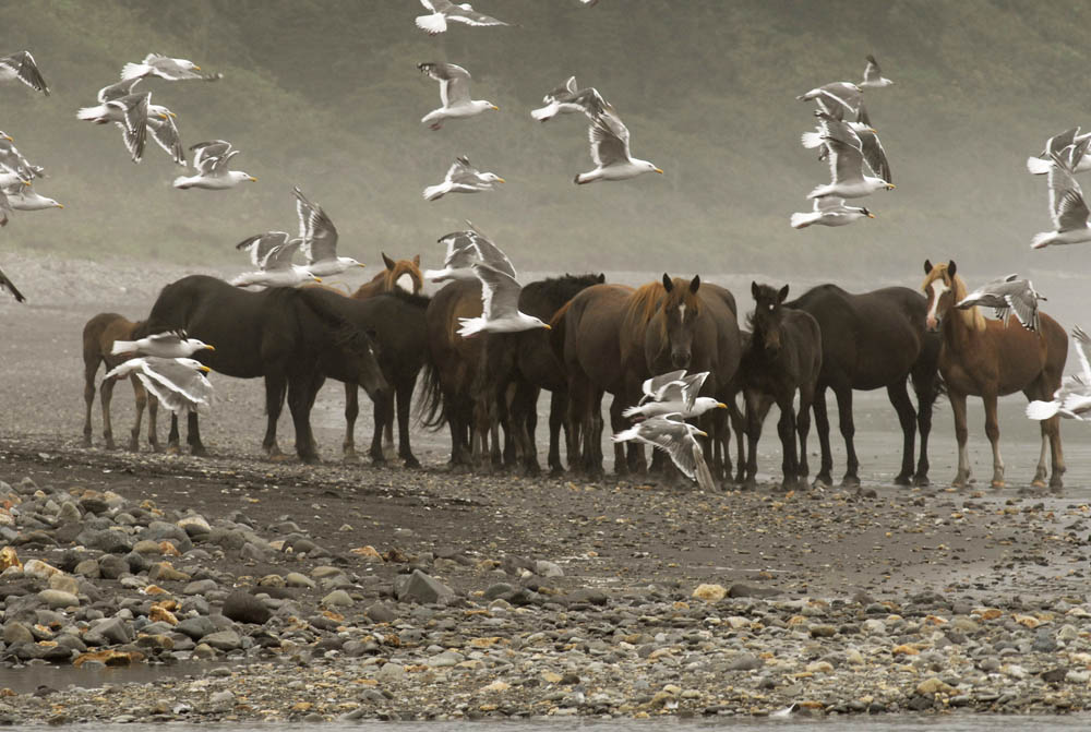 2/12. Запослен је као инспектор за рибарство, aли у слободно време ужива у необичном хобију – узгаја коње.