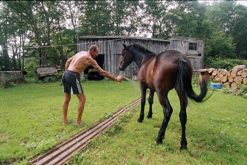 7/12. Андреј не даје имена својим коњима, било би тешко да их сва запамти. Али сви они могу да се надају да ће повремено добити посластицу – коцку шећера.