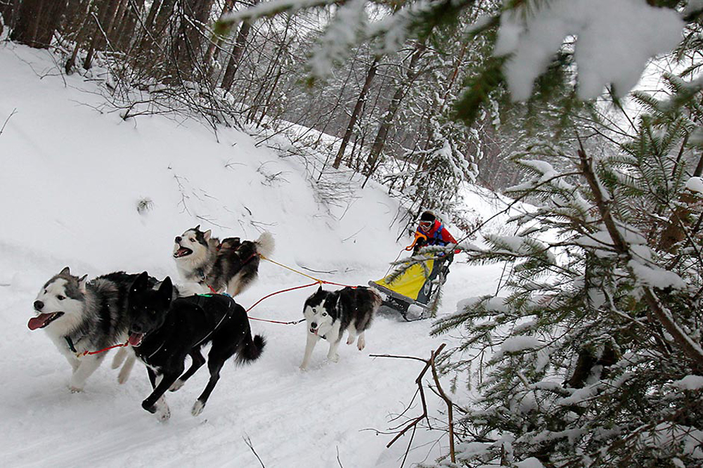 Учесник на трката со кучиња во Алтјан Чана во Зеленодолск.