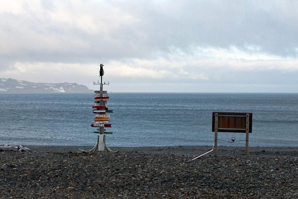 Macronectesi - prekrasne tamne ptice s vrlo dugačkim, uskim krilima – ovdje se gnijezde tijekom cijele godine, dijeleći otok s velikim brojem pingvina. Otok Ardley u većini slučajeva posjećuju ornitolozi. Odlazak drugih ljudi na otok veoma je ograničen.