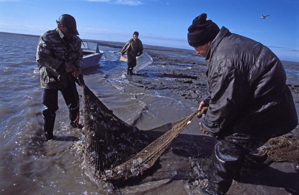 La vie à Choïna n'est pas opulente, mais nourrissante. Le golfe regorge de poissons : plie, navaga, saumon blanc, peled. L'argent vient des Norvégiens à travers la frontière, qui pendant de nombreuses années ont acheté les mûres locales.