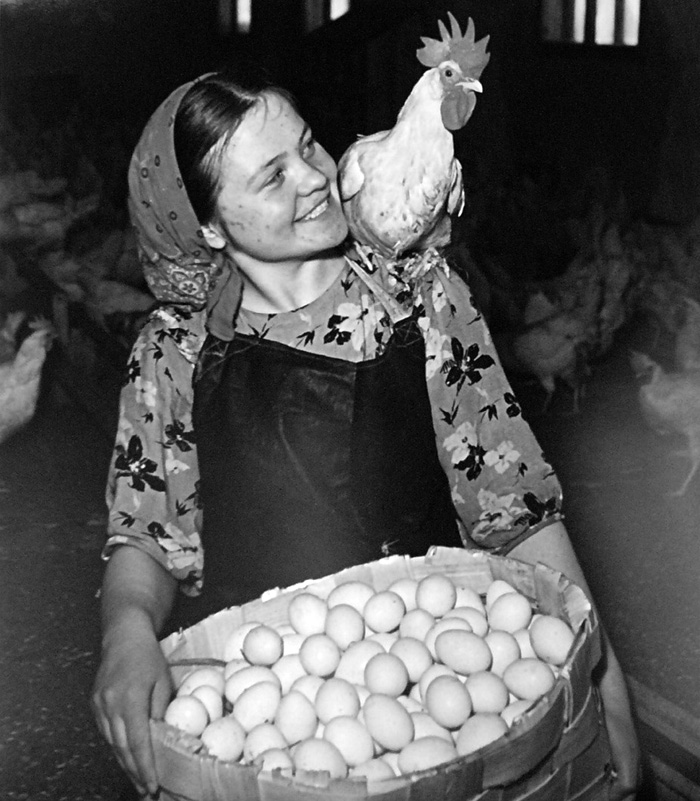 Poultry farm. 1950s // People of art, polar explorers, sailormen, steel melters hold a specific place in Yakov Ryumkin's photo diary.