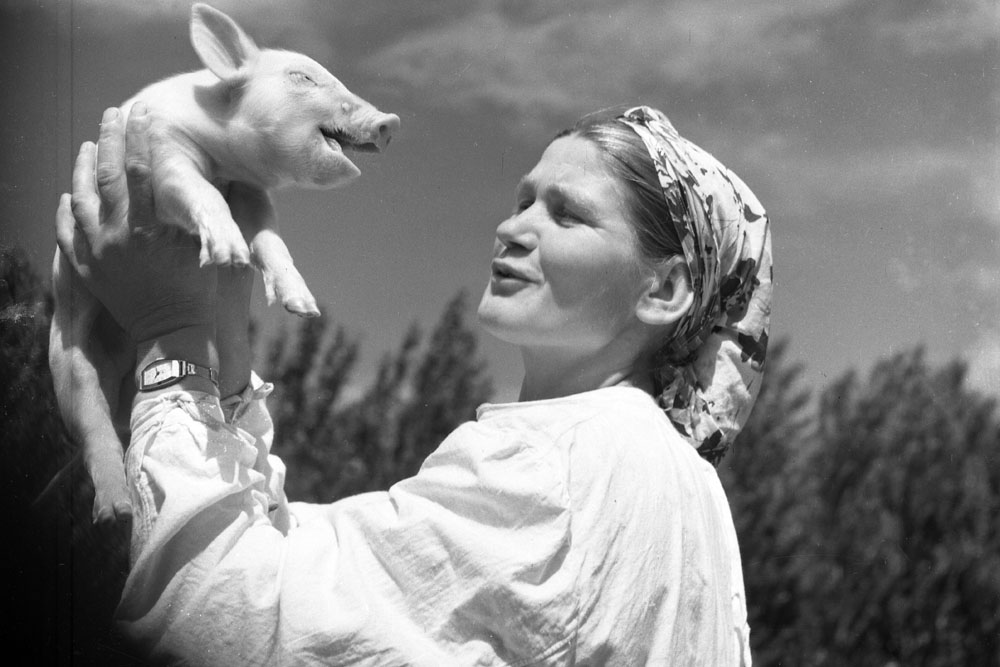 Piglet. 1950s // Ryumkin shooted various events which he faced. He took photographs not only of celebreties, but everyday people of working class. Being notorious photographer did not prevent him to visit remote villages and farms of Russia and other Soviet republics.