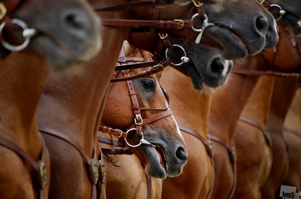 """Du wirst immer jemanden an deiner Seite haben // """"Die Pferde"""", Moscow"""