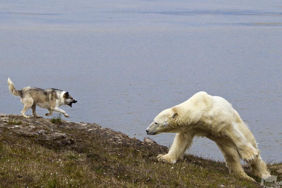 ロシアの大自然は驚くほど多様で、野生的で激しい面もある // 「闘い」、サレハルド、ヤマロ・ネネツ自治管区
