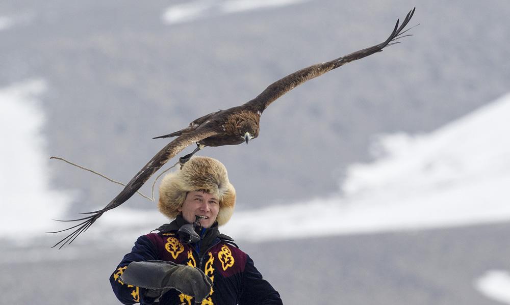 Les Faucons s'attaquent souvent aux oiseaux, tandis que les aigles royaux sont utilisés pour capturer des bêtes. Ce type de chasse est vieille de plusieurs siècles et reste un passe-temps populaire encore aujourd'hui.