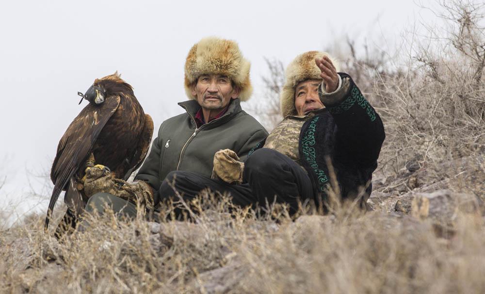 それにもかかわらず、狗鷲は野生の鳥なので、まずつかまえて、飼いならし、訓練して理想的な狩猟のパートナーにするには、多大な努力、忍耐、粘り強さ、そして強さが狩人に要求される。