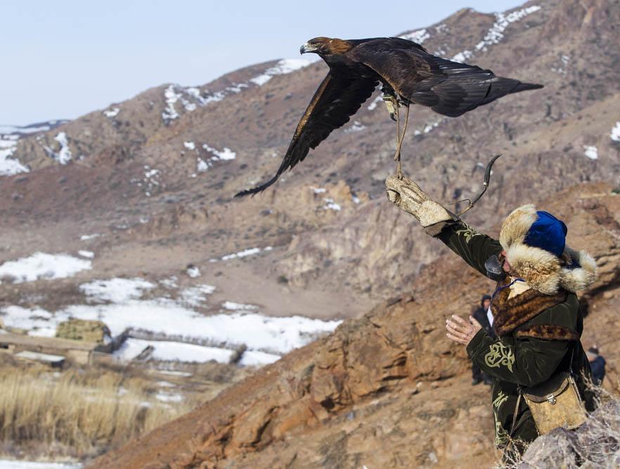 鳥がより穏やかで従順になると、主人の腕にとまるように訓練される。この頃は、つなぎ縄を長くする。鷲は徐々に主人になついていく。つながれてはいるが、大声で金切り声をあげて主人に挨拶し、主人の元へ飛ぼうとする。