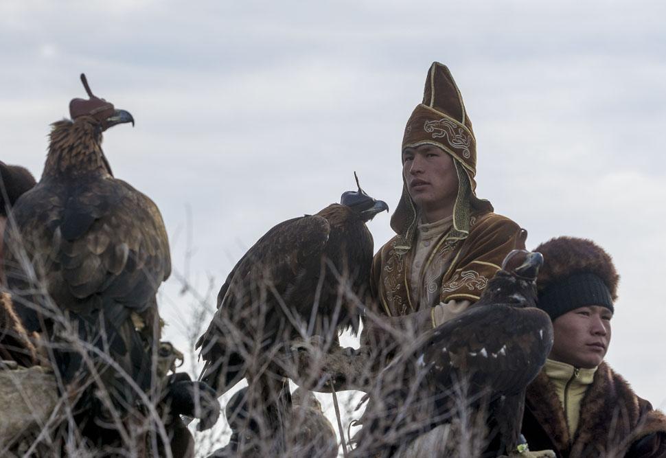 特別なフードを鳥に被せ、その目を覆う。何回かの調教で狗鷲は乗馬に慣れる。
