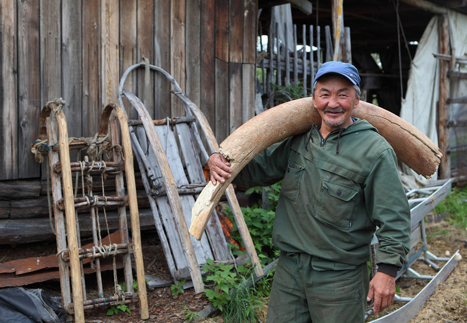 La défense de mammouth est plus dure que l'ivoire d'éléphant. Pendant des millénaires passés sous terre, les défenses acquièrent une variété de nuances - du blanc laiteux et rose au bleu-violet. La défense de mammouth a longtemps été utilisée pour fabriquer des boîtes décoratives, des peignes, des bijoux et des armes.