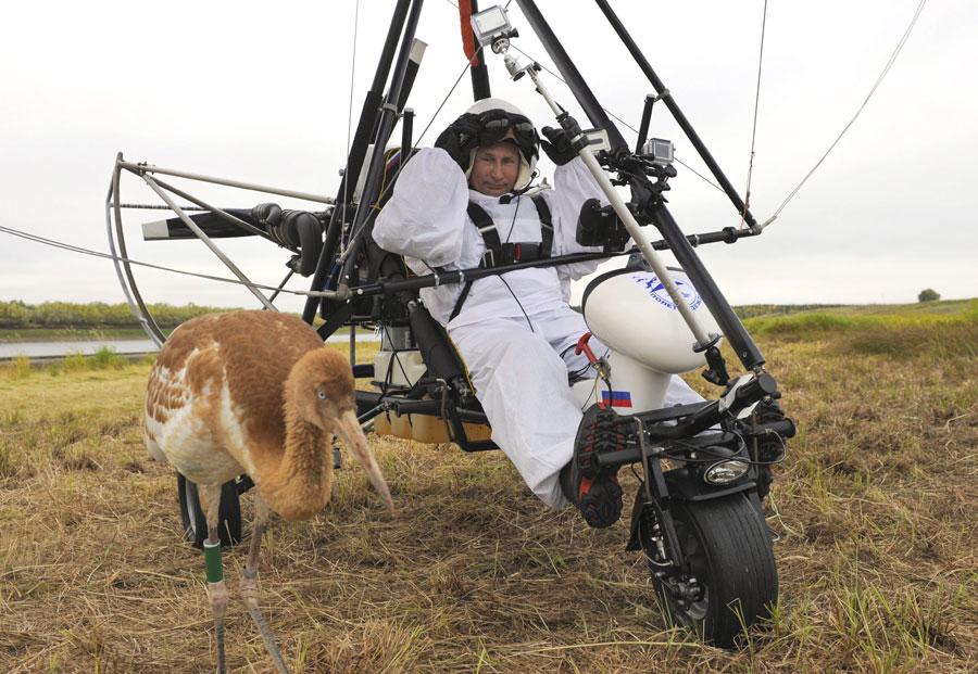 Pada 2012, Presiden Rusia Vladimir Putin berpartisipasi dalam The Flight of Hope, sebuah kegiatan untuk mempromosikan perlindungan bangau Siberia. Didampingi oleh burung bangau muda, sang presiden terbang bersama mereka menggunakan pesawat layang gantung bermotor.